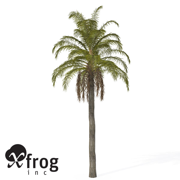queen palm tropical plant 3d model