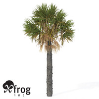 maya xfrogplants palmetto palm plant