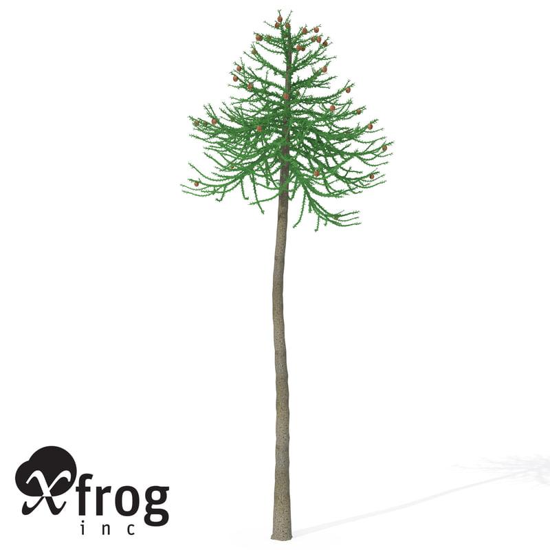 araucaria tree 3d model