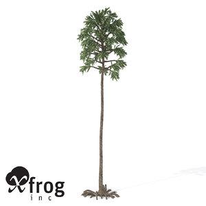 cordaites plant 3d model