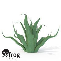 XfrogPlants Century Plant