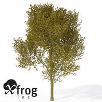 maya xfrogplants paloverde tree