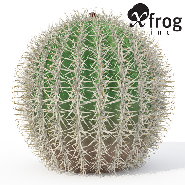 arizona barrel cactus plant 3d model