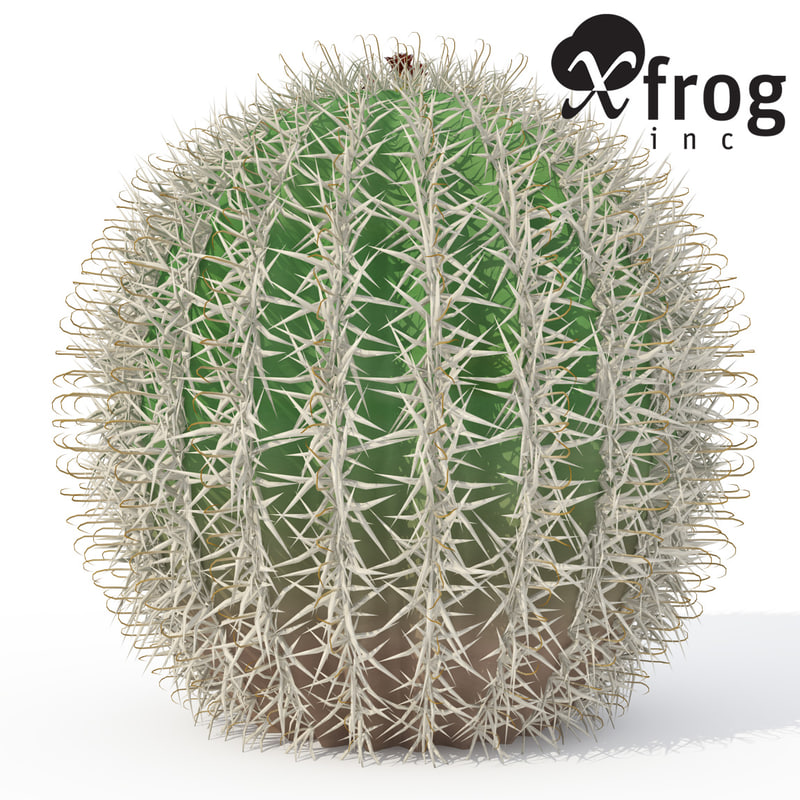 arizona barrel cactus plant 3d model