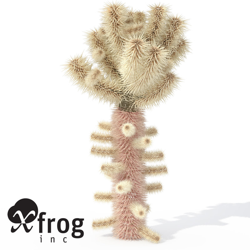 teddy bear cholla plant 3d model