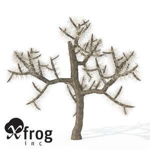 xfrogplants jumping cholla plant 3d model