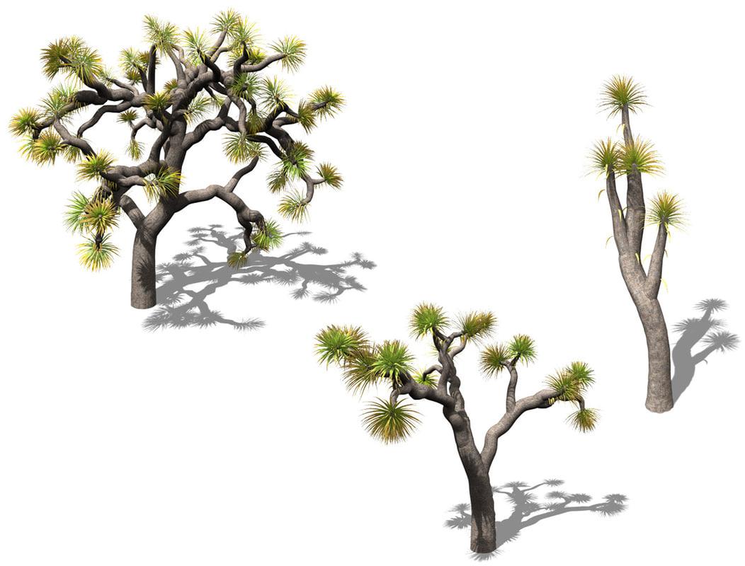 joshua tree plant 3d model