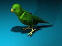 parakeet bird 3d model
