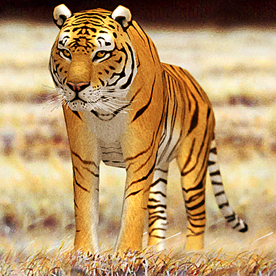 tiger 01 3d model