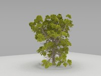 horse chestnut tree highly detailed
