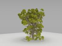 3d model horse chestnut tree maps