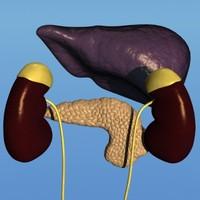 Liver Kidney Pancreas (LW)
