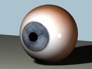 eye human anatomy max