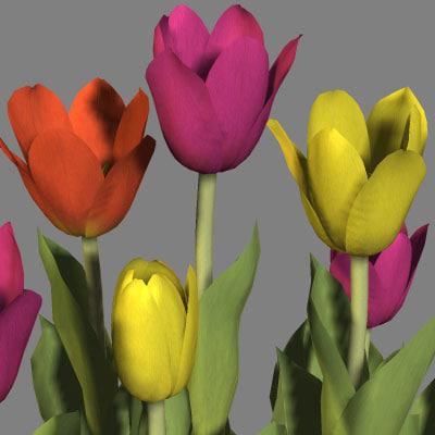 3d tulip model