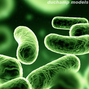 bacterium 3d model