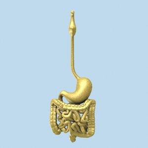 human throat stomach 3d model
