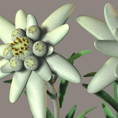 3d 3ds edelweiss