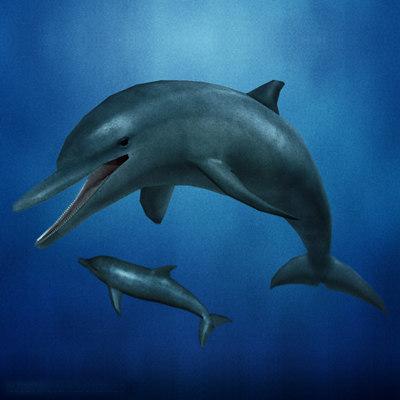 dolphin 01 3d max