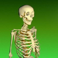 Human Skeleton.zip