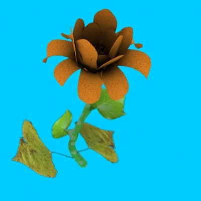 flower blooming animation 3d model