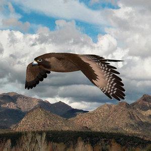 falcon wing 3d model