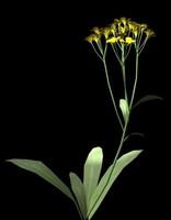 3d flower basket gold model