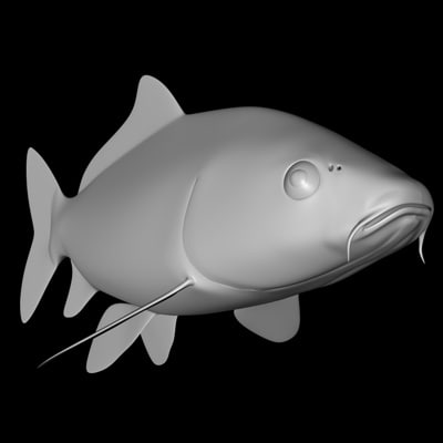 koi fish c4d