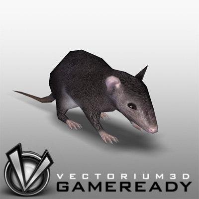 rat animal 3d model