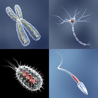 chromosome bacteria neuron cell 3d 3ds