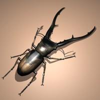 bug.max.zip