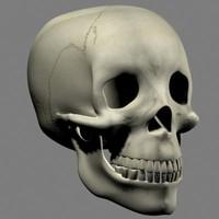 Human Skull.zip