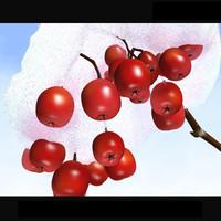 rowanberry branch snow max