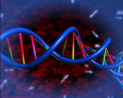 dna molecule 3d max