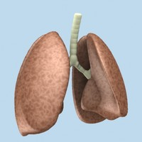 Lungs (Max)