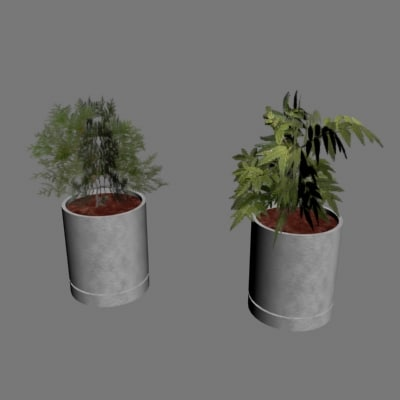 indoor plants 3d model