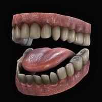 jaws teeth tongue 3d model