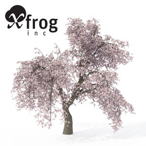 weeping higan cherry tree 3d model