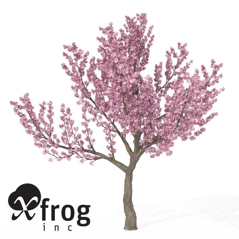 kanzan cherry tree blossoms 3d model