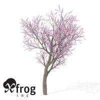 XfrogPlants Blossoming Peach Tree