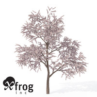 3d xfrogplants blossoming almond tree model