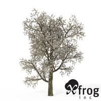3d xfrogplants blossoming plum tree model