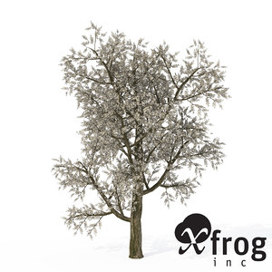 3d xfrogplants blossoming plum tree model