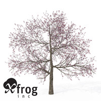 3d xfrogplants blossoming pissardii cherry model