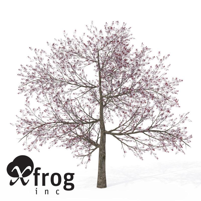3d xfrogplants blossoming pissardii cherry model