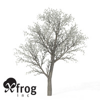 3d xfrogplants blossoming sweet cherry tree