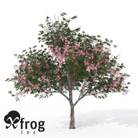 3ds xfrogplants blossoming oleander tree