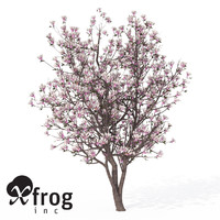 XfrogPlants Blossoming Saucer Magnolia