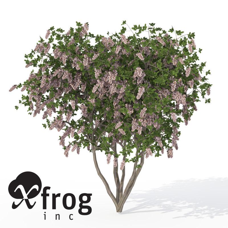 xfrogplants blossoming crape myrtle 3d model