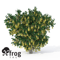 XfrogPlants Blossoming Golden Chain