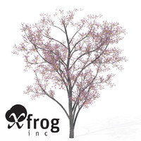 3d xfrogplants blossoming judas tree model